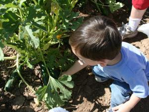 Nathan finding zucchini.