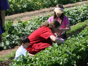 picking veggies