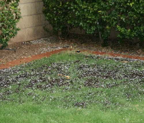 as we looked in the corner of the yard we could see the hail bouncing all over the place.